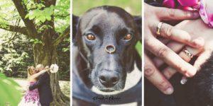 matrimoni con animali