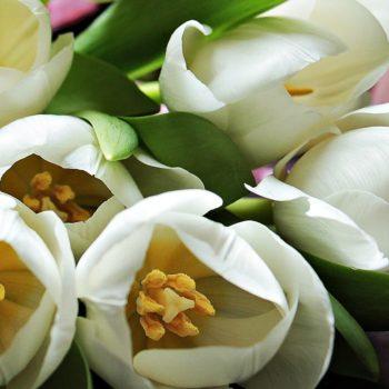 Confetto n° 31. Tulipani per matrimonio: la magia del colore